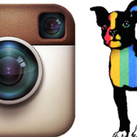 Should You Buy Instagram Followers?